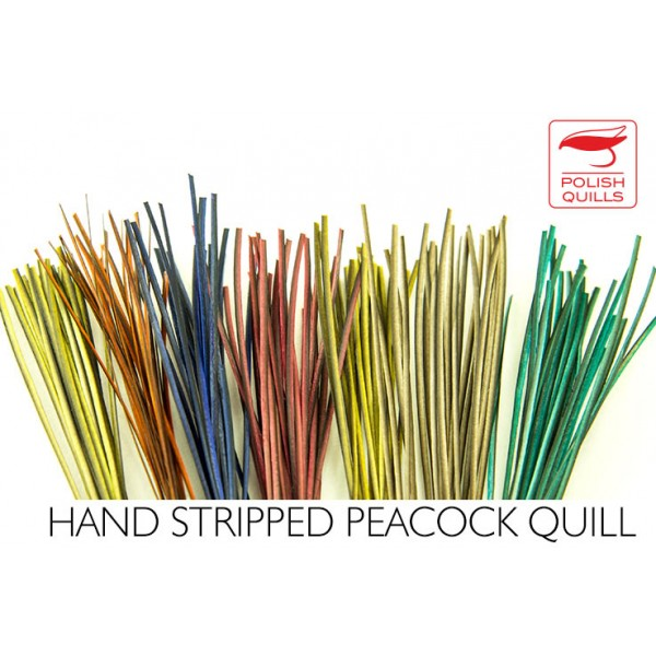Polishquills Hand Stripped Quill