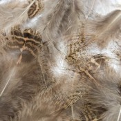 Feathers (13)